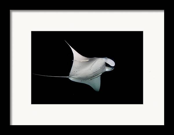 Horizontal Framed Print featuring the photograph Manta Ray by James R.D. Scott