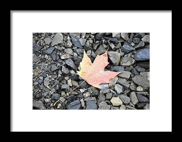 Canada Framed Print featuring the photograph Maple Leaf In The Rain by Rosemary Legge