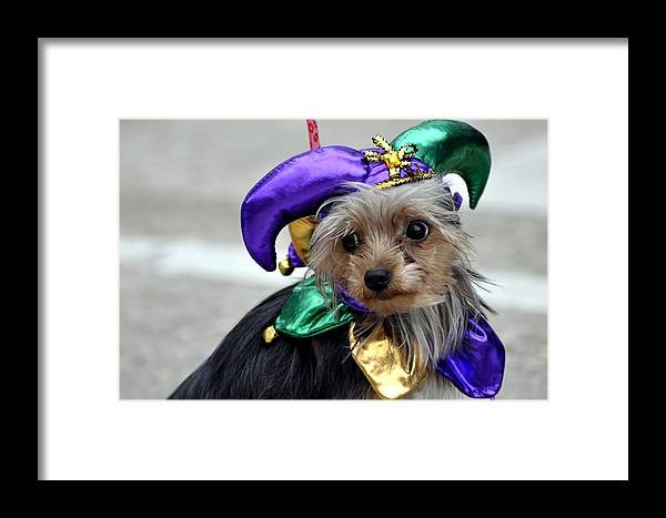 Dogs Framed Print featuring the photograph Mardi Gras Pooch by Helen Haw