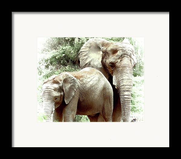 Arne J Hansen Framed Print featuring the photograph Matriarch by Arne Hansen