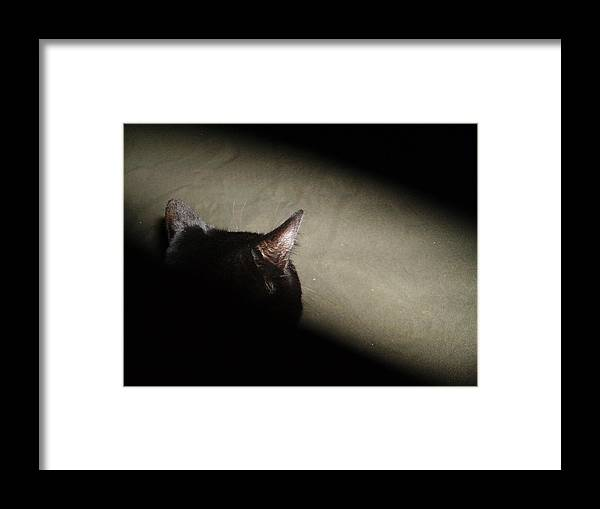 Cat Framed Print featuring the photograph Matrix Kitty by Naomi Rogers