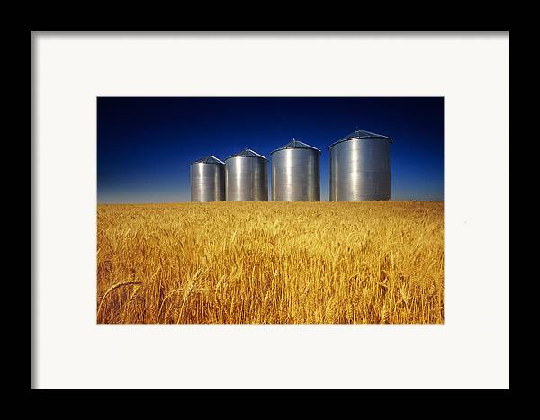 Daytime Framed Print featuring the photograph Mature Winter Wheat Field With Grain by Dave Reede