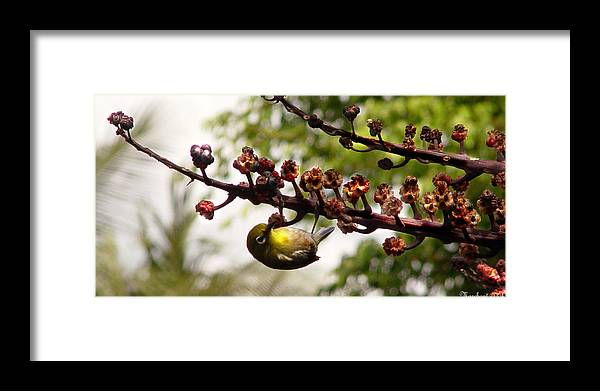 Maui Framed Print featuring the photograph Maui Bird by Marilyn Marchant