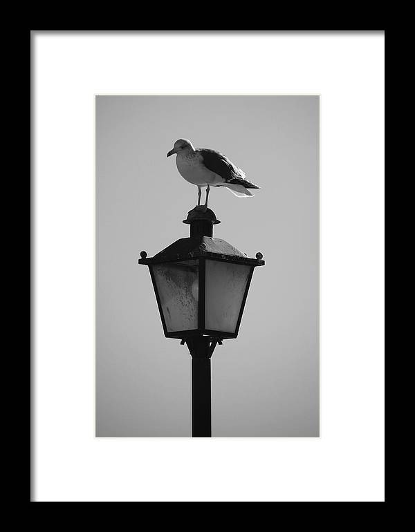 Jezcself Framed Print featuring the photograph Mel Rest by Jez C Self