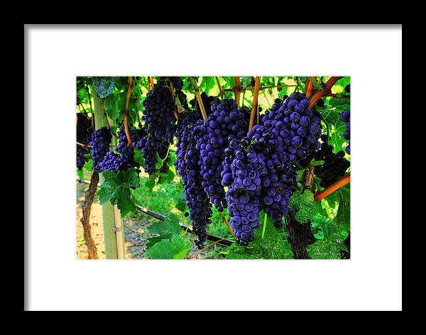 Wesley Framed Print featuring the photograph Merlot by Wesley Allen Shaw