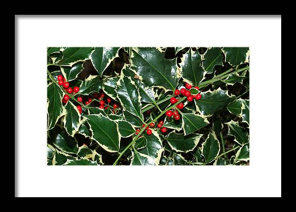 Merry Christmas Framed Print featuring the photograph Merry Christmas by Bai Qing Lyon