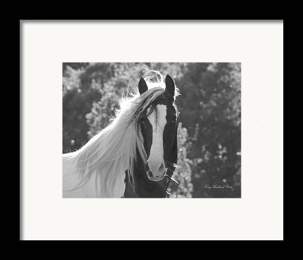 Equine Framed Print featuring the photograph Mesmerizing Eyes by Terry Kirkland Cook