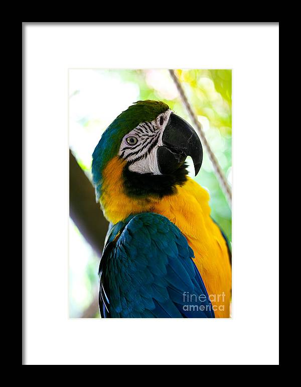 Mexico Framed Print featuring the photograph Mexican Parrot by Natalia Babanova