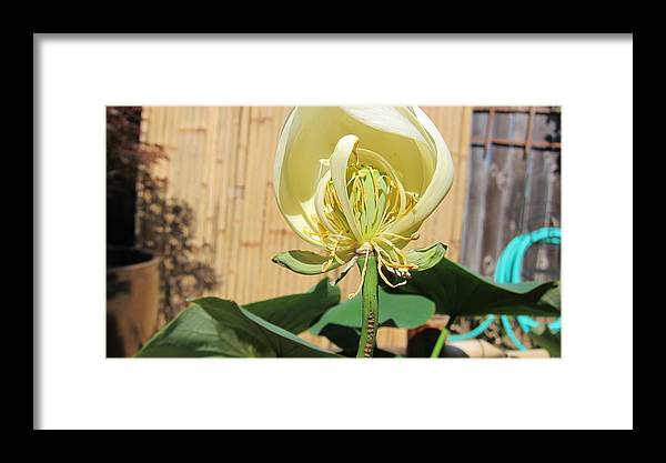 Water Framed Print featuring the photograph Michelle Half Off by Deanne Rotta