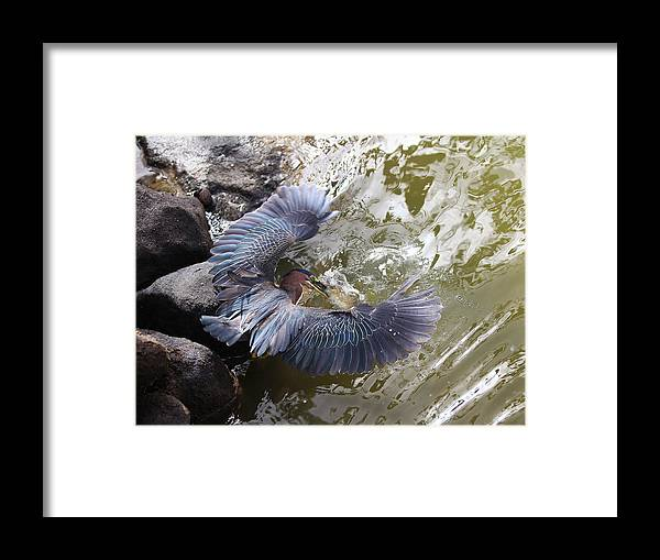 Heron Framed Print featuring the photograph Mine All Mine by Stephen Bowden