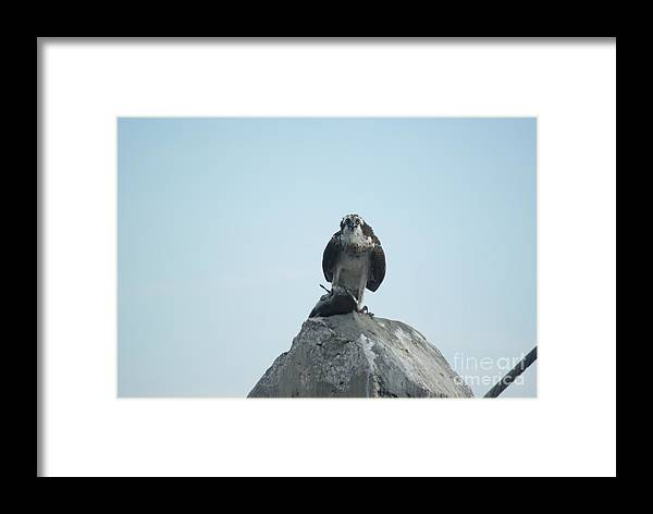 Avian.nature Framed Print featuring the photograph Mine Mine Mine by Jack Norton