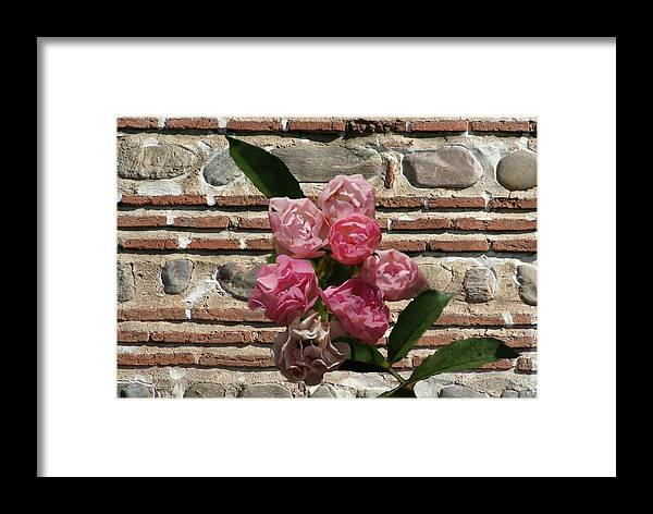Flowers Framed Print featuring the photograph Mini Flowers by Rick Friedle