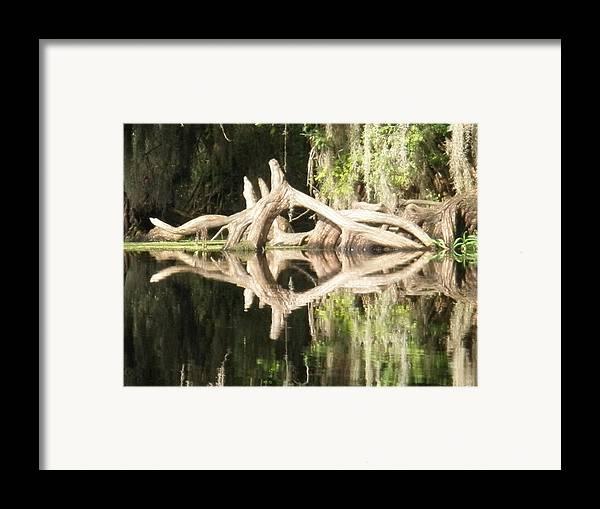 Florida Framed Print featuring the photograph Mirrorknot by Warren Clark