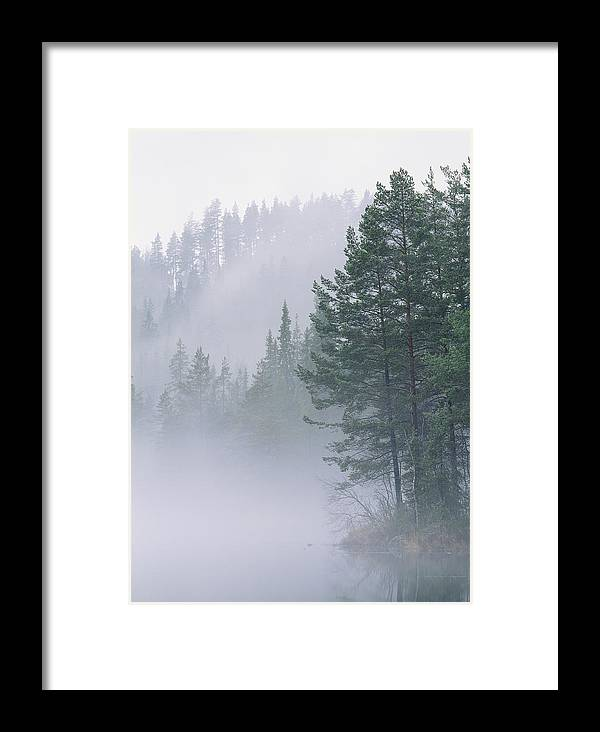 Forests And Forestry Framed Print featuring the photograph Mist Rises From An Evergreen Forest by Mattias Klum