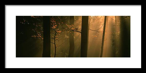 Nature Framed Print featuring the photograph Misty Autumn Forest At Sunset by Ulrich Kunst And Bettina Scheidulin