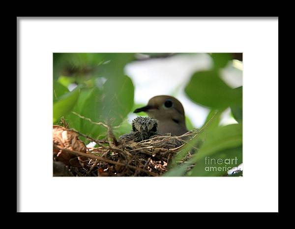Birds Framed Print featuring the photograph Mom And New Baby by Yumi Johnson