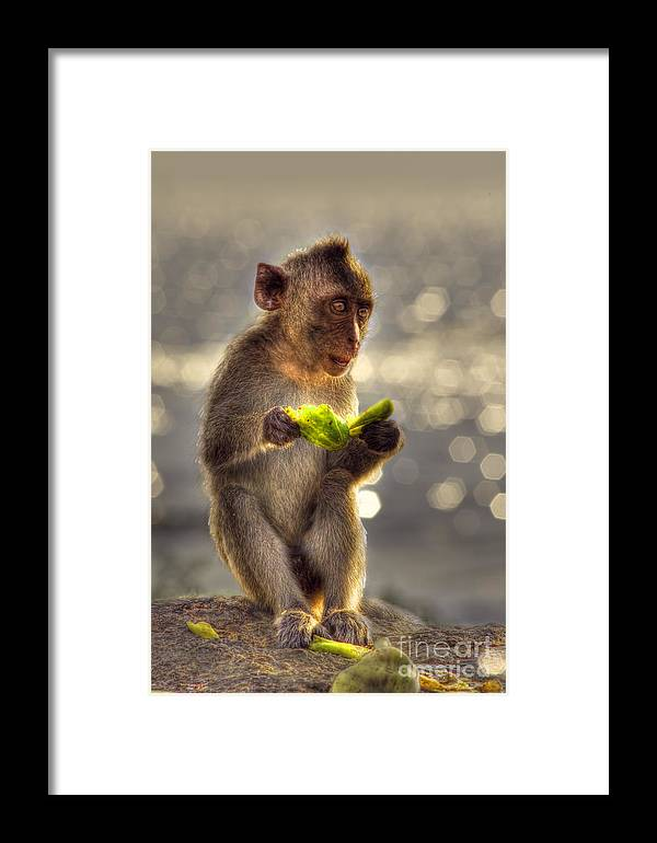 Monkey Framed Print featuring the photograph Monkey by Somchai Kaewkhampaeng