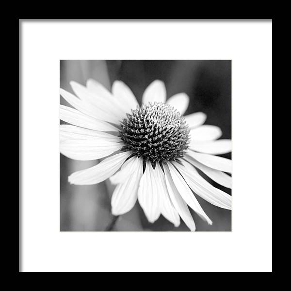 Cone Flower Framed Print featuring the photograph Monochrome Echinacea by Margaret Pitcher