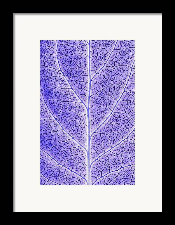 Abstracts Framed Print featuring the photograph Monotone Close Up Of Leaf by Sean White
