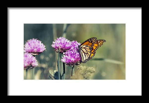 Butterfly.macro Framed Print featuring the photograph Moody Monarch by Bill Tiepelman