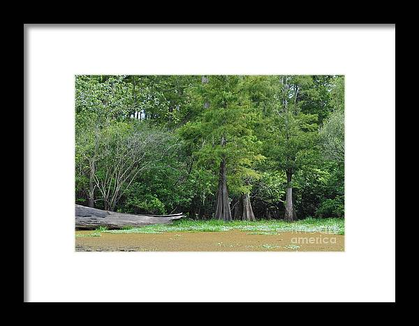 Louisiana/louisiana Bayous/cypress Trees/dead Trees/swamp Grass/trees/swamp Scene/driftwood/cypress Stump/duckweed/atchafalaya/swamps/wildlife/outdoor/cajun Country/ Framed Print featuring the photograph Morales Swamp Pic.#008 by Patricia Morales
