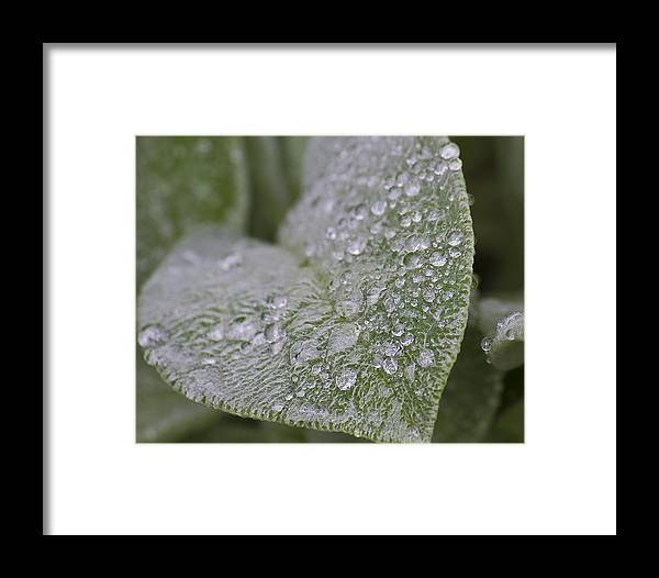 Green Framed Print featuring the photograph Morning Dew by Tammye Nash