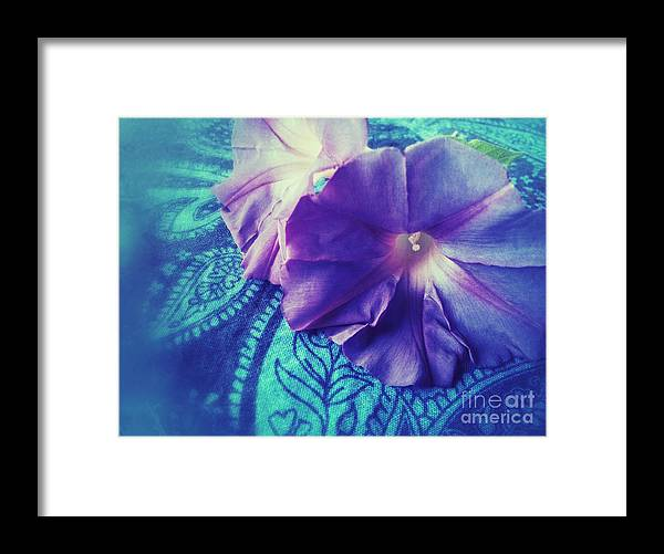 Morning Glories Framed Print featuring the photograph Morning Glories On Paisley by Ruby Hummersmith