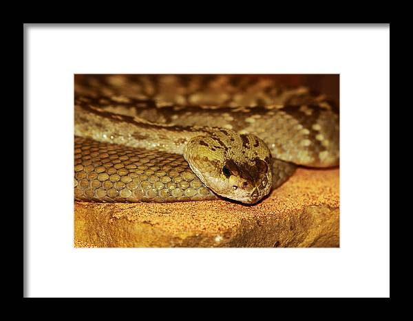 Snake Framed Print featuring the photograph Morning Heat by Paul Slebodnick
