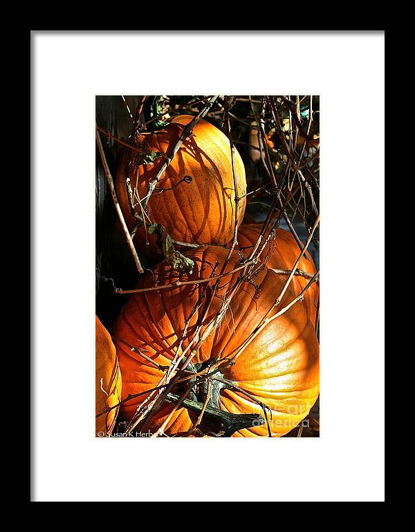 Outdoors Framed Print featuring the photograph Morning Pumpkins by Susan Herber