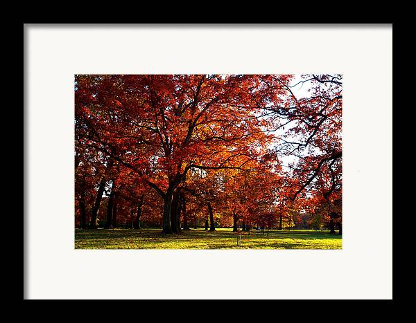 Arboretum Framed Print featuring the photograph Morton Arboretum In Colorful Fall by Paul Ge