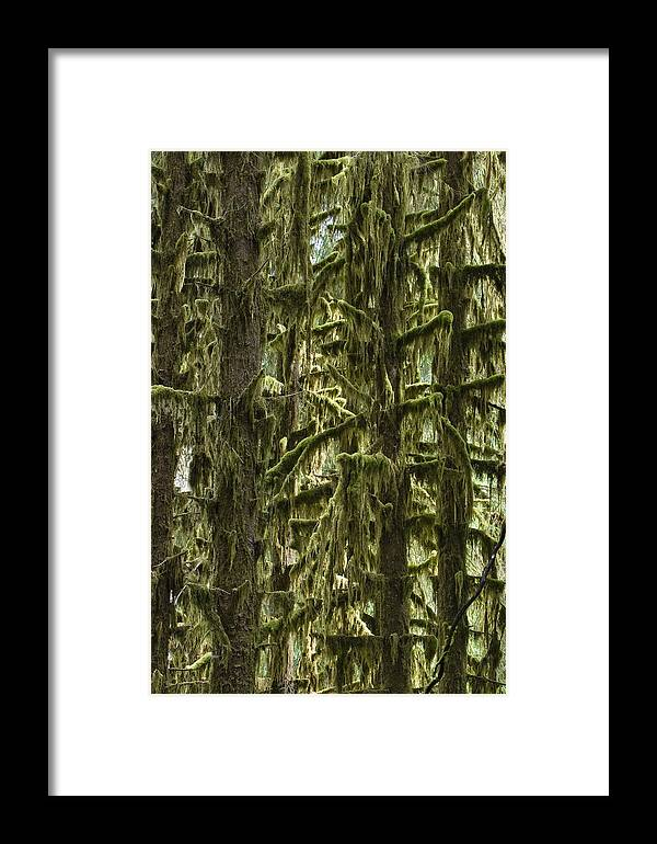 Mp Framed Print featuring the photograph Moss Covered Trees, Hoh Rainforest by Konrad Wothe