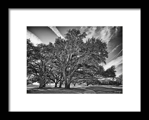 Beaufort County Framed Print featuring the photograph Moss-draped Live Oaks by Phill Doherty