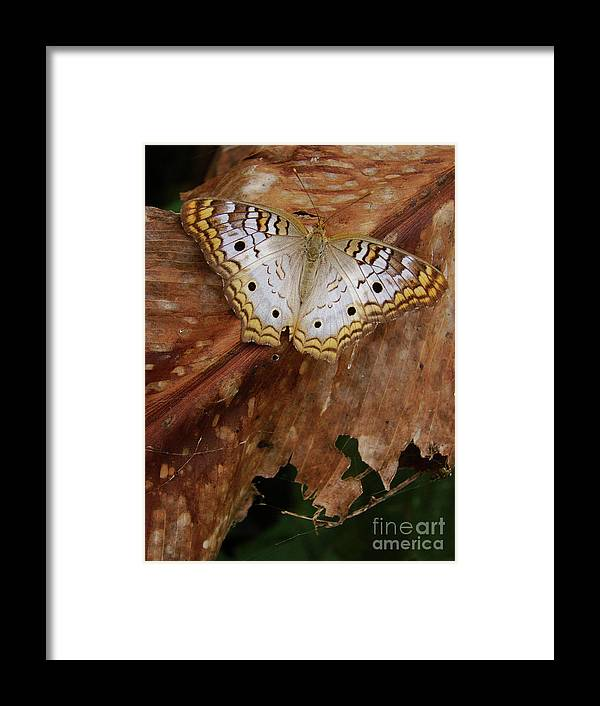 Moth Framed Print featuring the photograph Moth by Mark Holbrook
