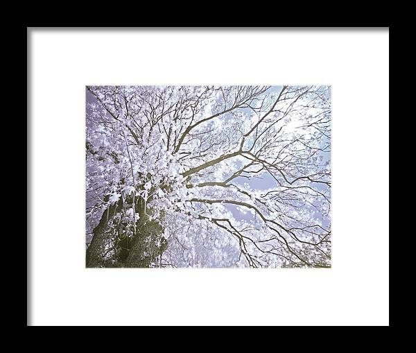 Nature Framed Print featuring the photograph Mother Nature by Domagoj Borscak