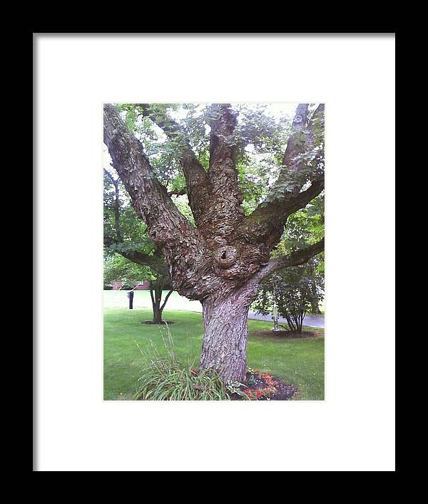 Photography Framed Print featuring the photograph Mother Weller's Tree by Lesa Weller