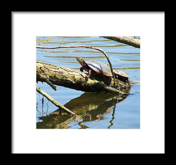 Mother And Baby Turtle Framed Print featuring the photograph Mother's Day by Todd Sherlock