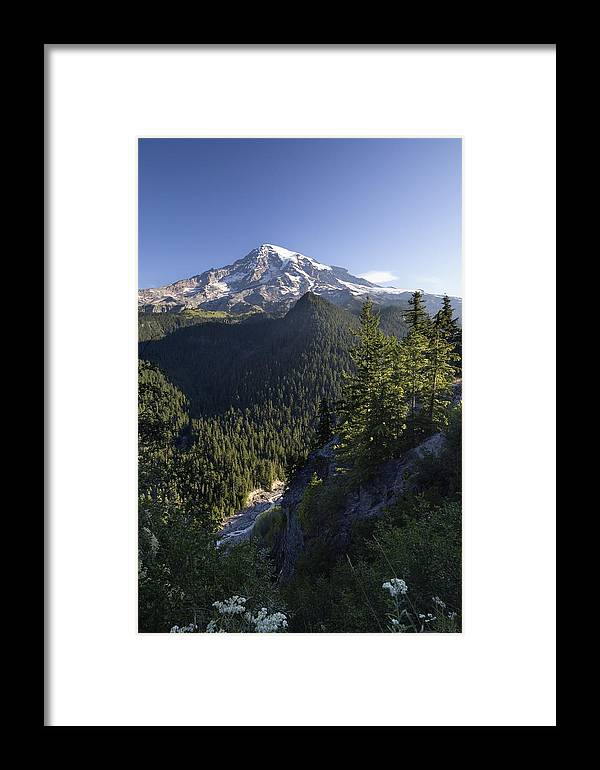 Mp Framed Print featuring the photograph Mount Rainier Surrounded By Forest by Konrad Wothe