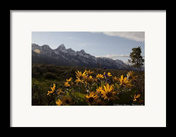 Flowers Framed Print featuring the photograph Mountain Flowers by Charles Warren