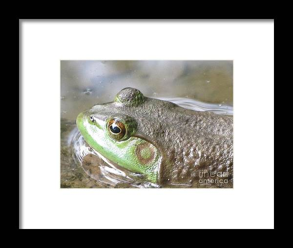 Frog Framed Print featuring the photograph Mountain Pond Wildlife by Susan Carella