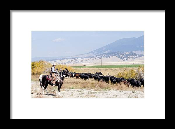 Cowboy Framed Print featuring the photograph Moving The Herd by Fran Riley
