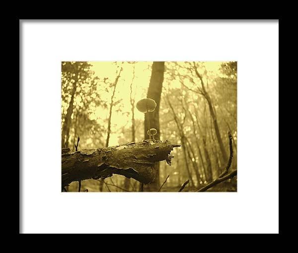 Mushrooms Framed Print featuring the photograph Mushrooms by Christoffer Saar