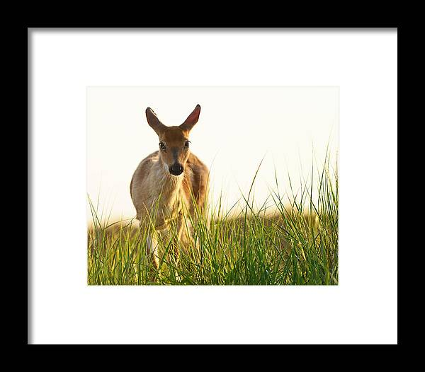 Deer Framed Print featuring the photograph My Friend At Fire Island by Vicki Jauron
