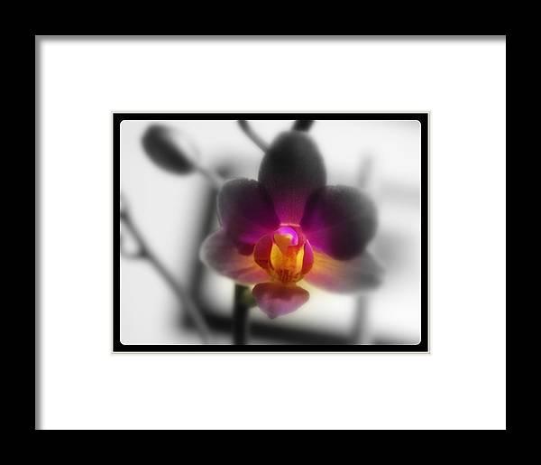 Flower Framed Print featuring the digital art My Lil Treasure by Teri Schuster