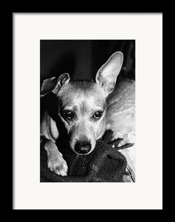 Dog Framed Print featuring the photograph My Sweet Angel by Alessandro Della Pietra