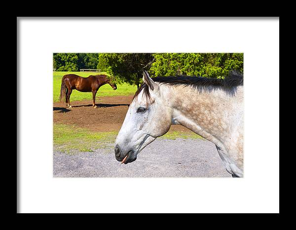 Horses Framed Print featuring the photograph Nanny Nanny Boo Boo by Paul Mashburn
