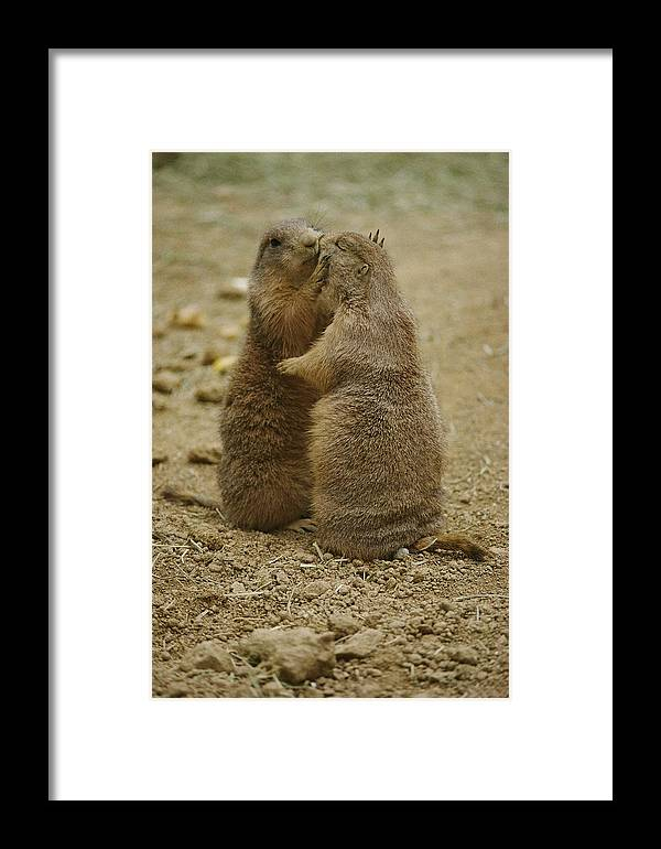 National Zoological Park Framed Print featuring the photograph National Zoo 2 Prarie Dogs Sitting by Brian Gordon Green