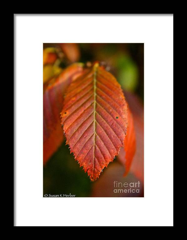 Outdoors Framed Print featuring the photograph Natural Bronze by Susan Herber