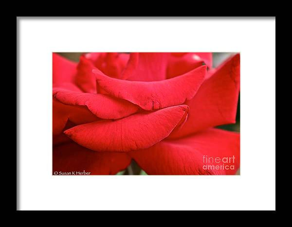 Garden Framed Print featuring the photograph Natural Red Carpet by Susan Herber