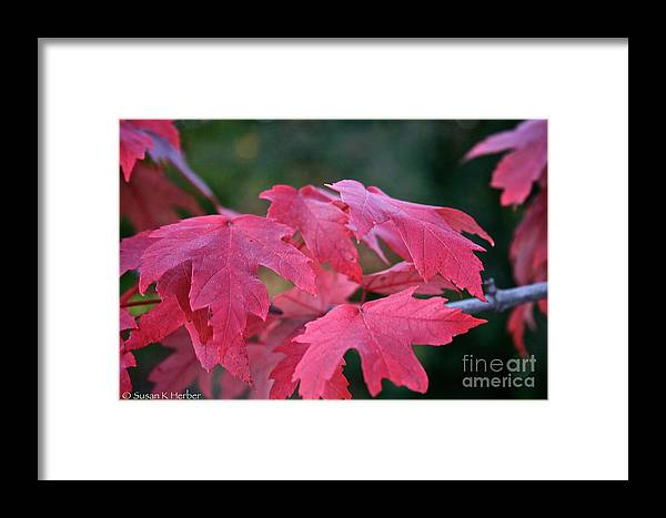 Outdoors Framed Print featuring the photograph Naturally Vibrant by Susan Herber