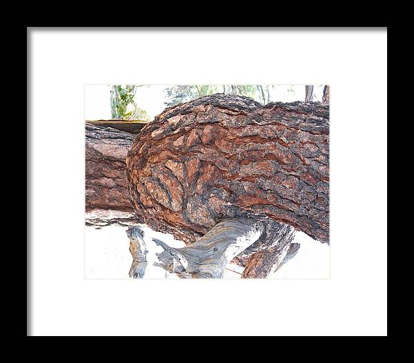 Nature Framed Print featuring the photograph Nature's Natural Abstract Art by Merton Allen